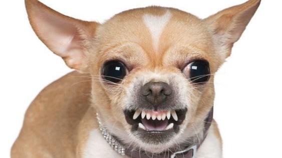 brincando-de-casinha-dicas-de-decoracao-blog-mari-cachorro-medo-2