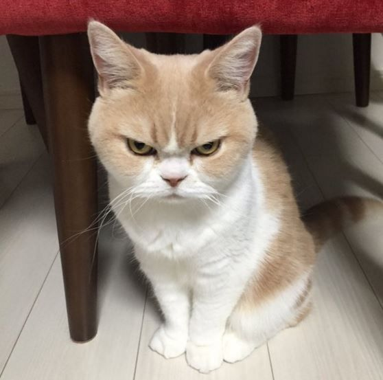 brincando-de-casinha-dicas-de-decoracao-blog-mari-gato-medo